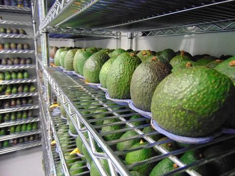 Apeel_sciences_avocados_large.jpg