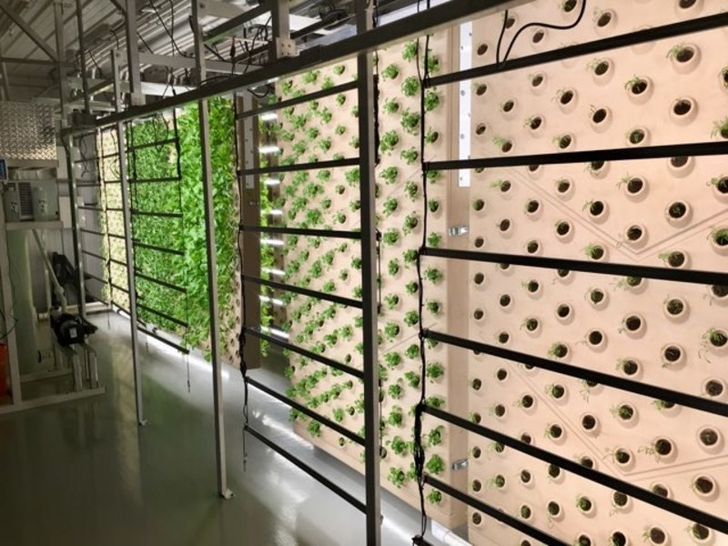 nside the world's first solar powered vertical aeroponic farm