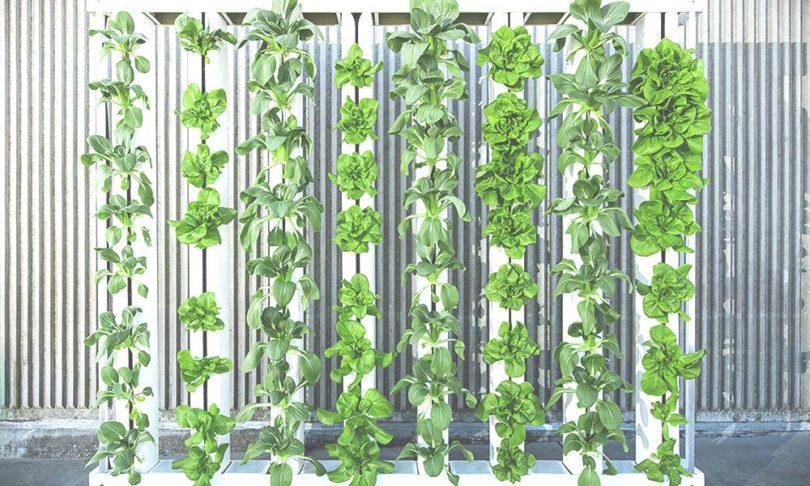 EWP_A-Beginners-Guide-to-Vertical-Farming-810x486.jpg
