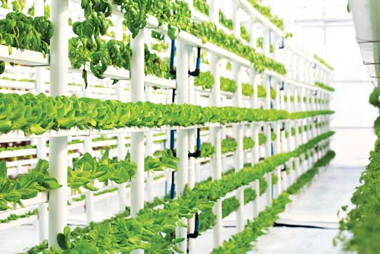 The National Organic Standards Board has ruled that hydroponic and aquaponic products will continue to be eligible for organic certification.  Photo by Getty Images/LouisHiemstra