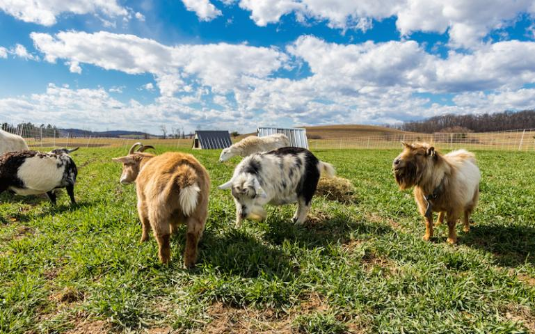 What does Regenerative Organic Certification mean for producers and consumers? Courtesy of The Rodale Institute