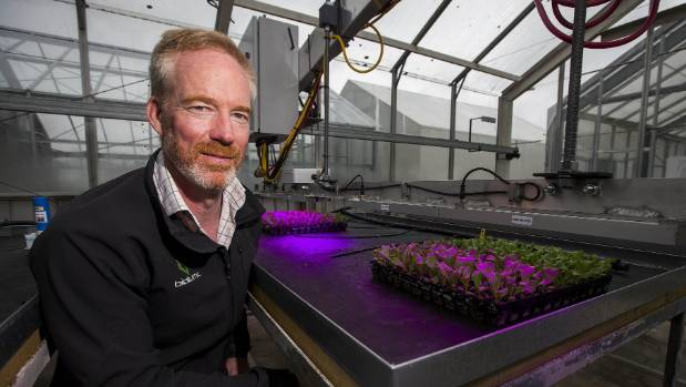Warren Bebb, BioLumic chief executive, in the glasshouse where seedlings are treated with UV light.  |  PHOTO: DAVID UNWIN/STUFF