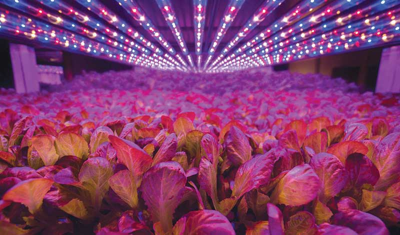 AeroFarms' vertical farming methods help it produce nearly 2 million pounds of leafy greens annually in its Newark facility. Photo by AeroFarms