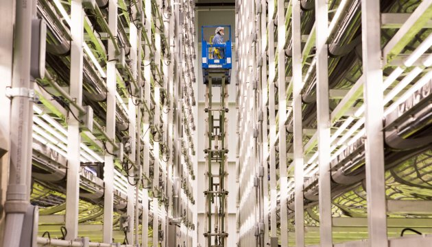 A scissor lift takes an employee to the highest levels of AeroFarms' vertical planters.CREDIT: Ellise Verheyen