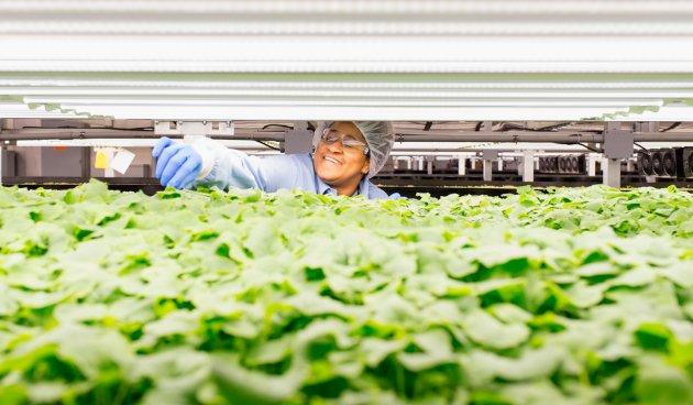 AeroFarms employee Samentha Evans-Toor checks the plant growth in a Newark, New Jersey, facility. CREDIT: Alex Kwok