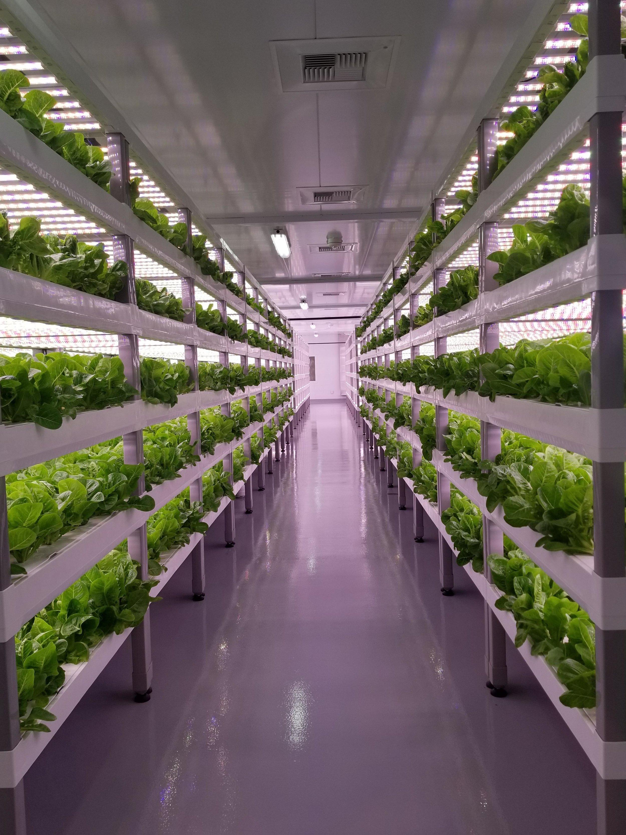 OASIS FARM - LAS VEGAS, NEVADA