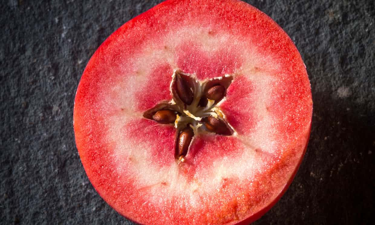 A red-fleshed apple of the Redlove hybrid variety. Unusual fruits such as this could soon become more common thanks to use of technologies such as Crispr. Photograph: Bailey-Cooper Photography/Alamy Stock Photo