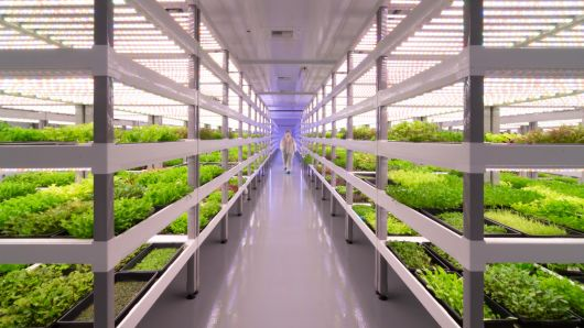 Oasis Biotech  One of the nation's largest indoor vertical farms is about to launch in Las Vegas and eventually span more than 200,000 square feet.