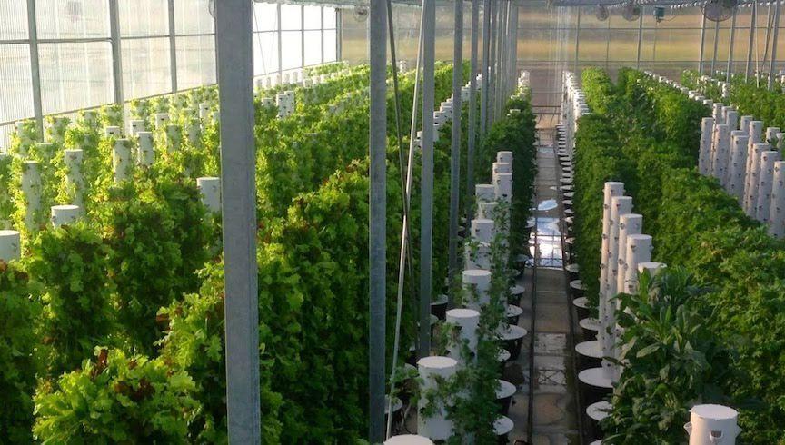 Courtesy of Altius Farms  Altius Farms will grow leafy greens on towers like these at Scissortail Farms in Tulsa, Okla.