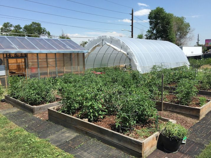 Courtesy of Tracy Weil  Farm 39 in RiNo sells about 8,000 tomato plants a year.