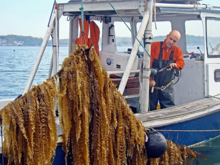 GreenWave grows seaweed and shellfish in an innovative design system.