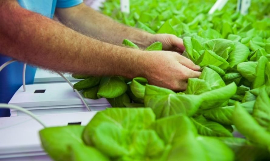Farm 360 grows sustainable, local food in a hydroponic system that provides local jobs.