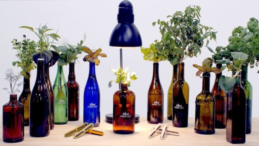 Urban Leaf offers a kit to turn glass bottles into miniature, soil-less gardens.