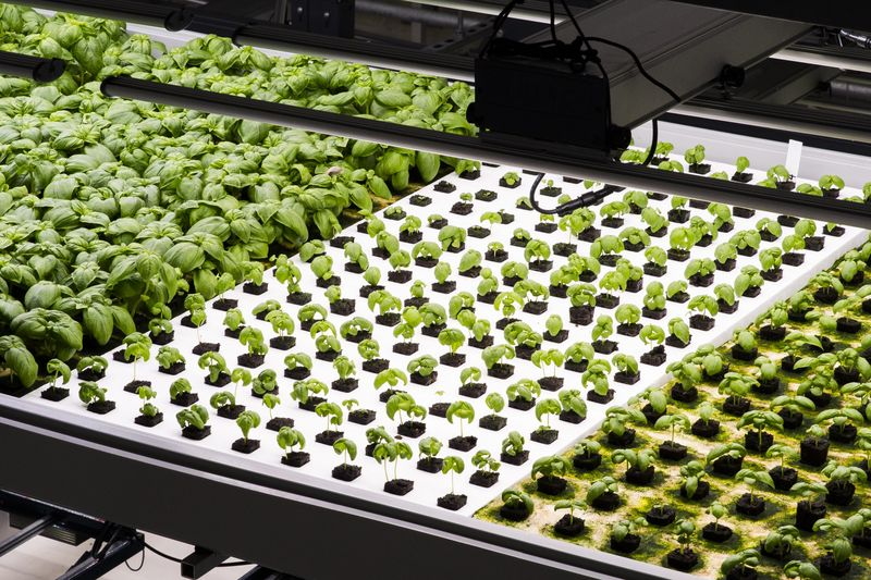 Trays of vegetables growing at Bowery Farming.  Photographer: David Williams/Bloomberg