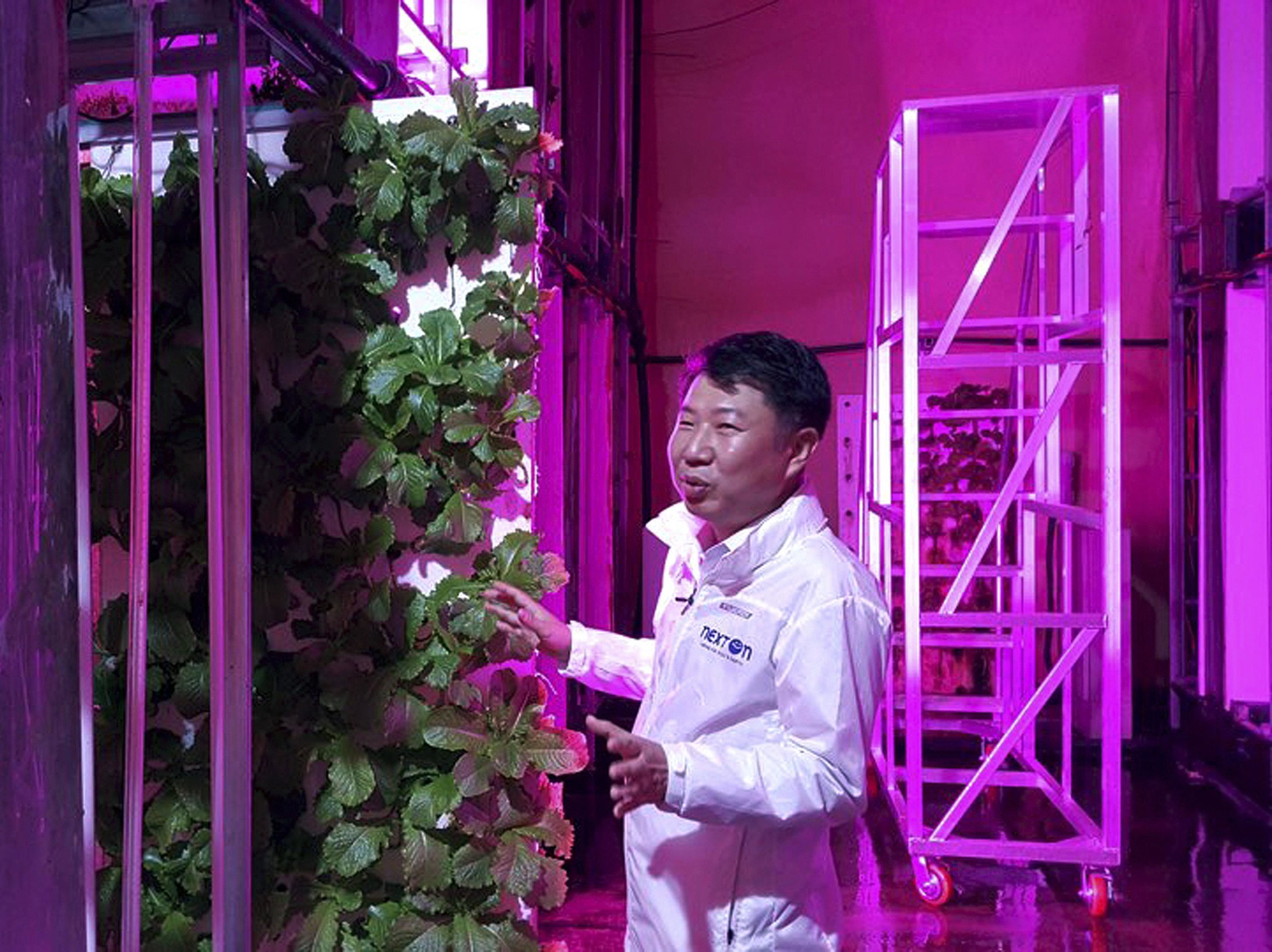 Head of NextOn Choi Jae Bin explains how his high-tech tunnel-based vertical indoor farm NextOn in Okcheon, South Korea, could be a potential solution to the havoc wreaked on crops by the extreme weather linked to climate change, and to shortages of land and workers as the country ages.Picture: AP