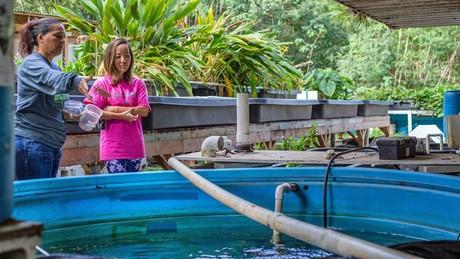 Ilima Ho-Lastimosa feeds fish in an aquaponics set-up, while Jane Chung-Do looks on.