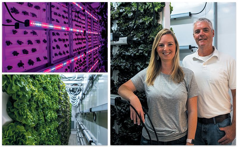 (Clockwise from top left) A lighting system nurtures infant greens; Tiger Corner Farms general manager Stefanie Swackhamer and her dad, AmplifiedAg CEO Don Taylor; green oak lettuce, nearly ready to harvest.
