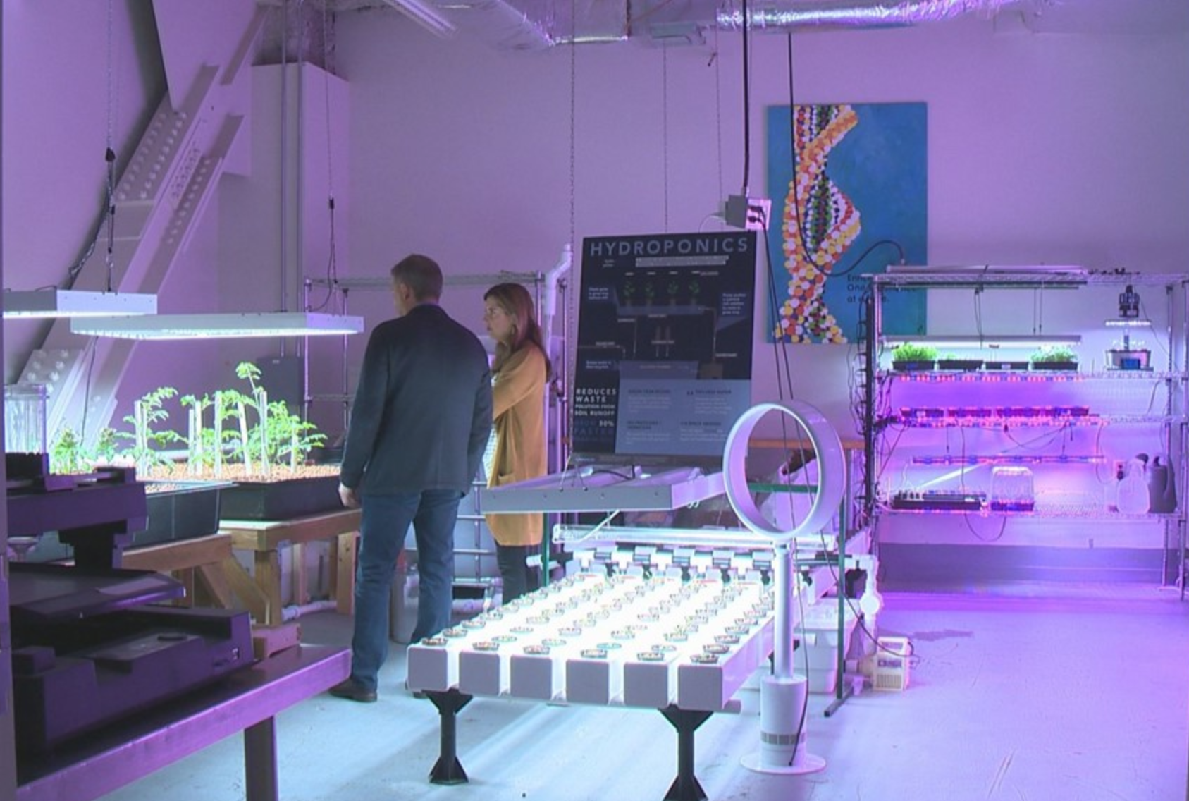 The Nines, a luxury hotel in downtown Portland, is growing much of its own food in hydroponic facilities in the basement of the hotel. Photos by Nina Mehlhaf, KGW 2018