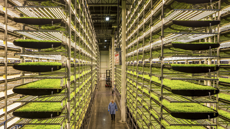 Aerofarms in Newark, New Jersey, is the world's largest high-tech vertical 'farm'. It's in a 9 144m2 warehouse, which has no sun or soil and uses less water