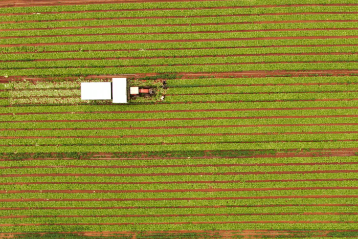 PHOTO:  A bird's-eye view of a lettuce crop on the fringes of Adelaide. (ABC News: David Sciasci)