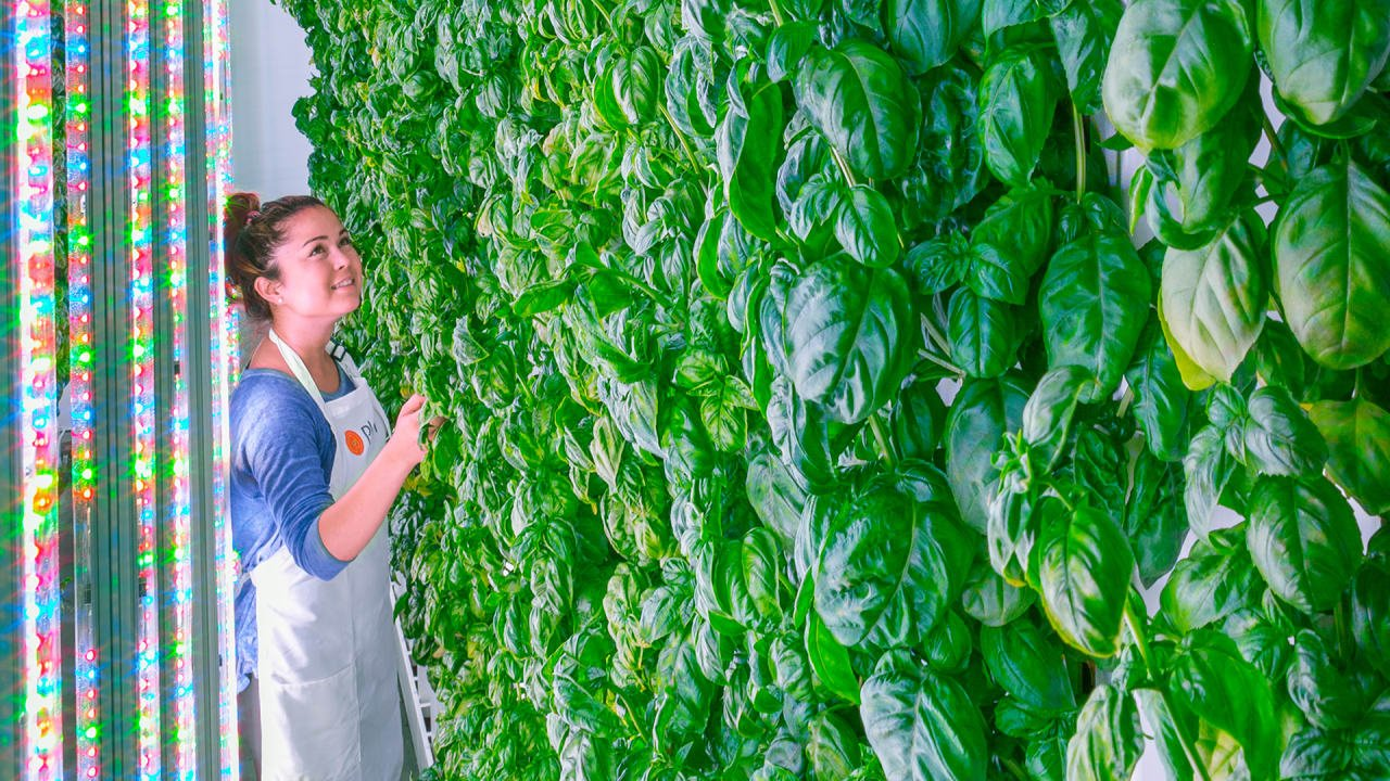 PlentyInside Plenty, a Silicon Valley-based urban farming startup that scored the largest ag-tech investment in history.
