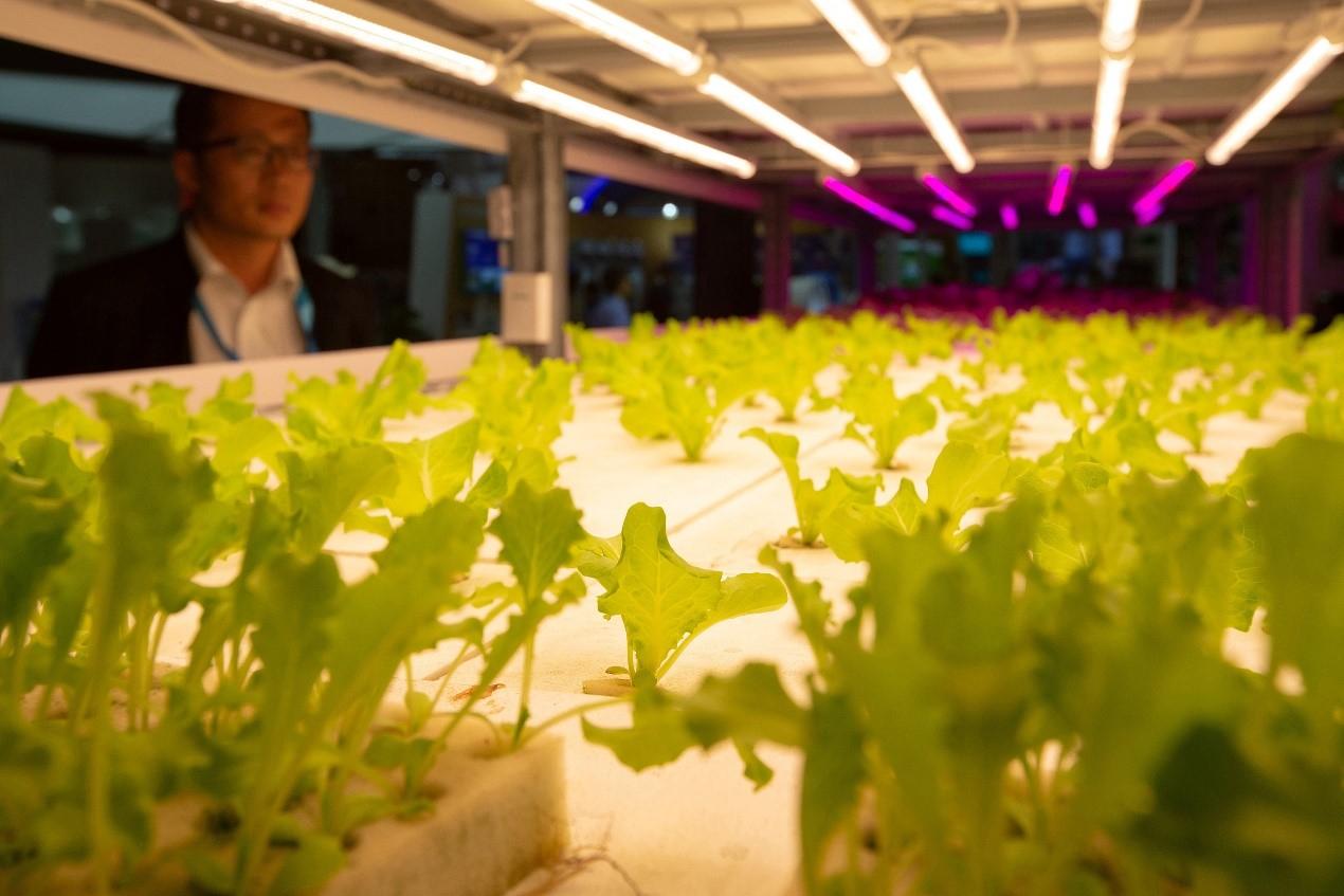 Plant factory using artificial light. /VCG Photo