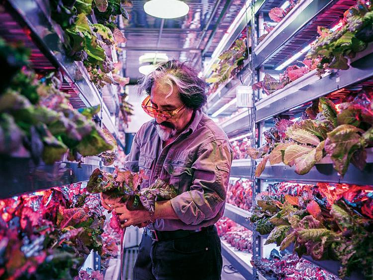 Emirates Flight Catering's 130,000-sq-ft facility will harvest 2,700kg of herbicide- and pesticide-free leafy greens a day at full production.Image Credit: Supplied