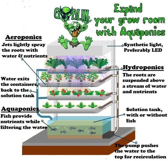 Goblin Hydro converting your hydroponic grow room to aquaponics.jpg