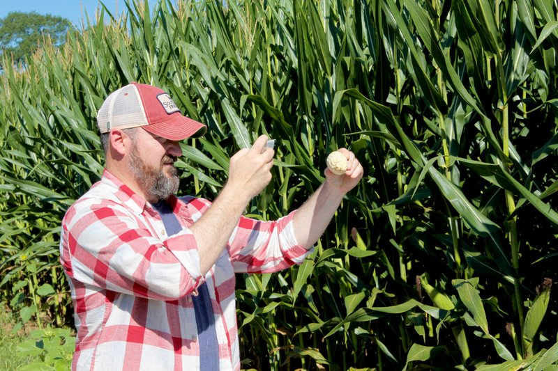 FARMWAVE Founder and CEO Craig Ganssle uses its smartphone app with an automated kernel count feature to assess corn yield. Photo credit: FARMWAVE
