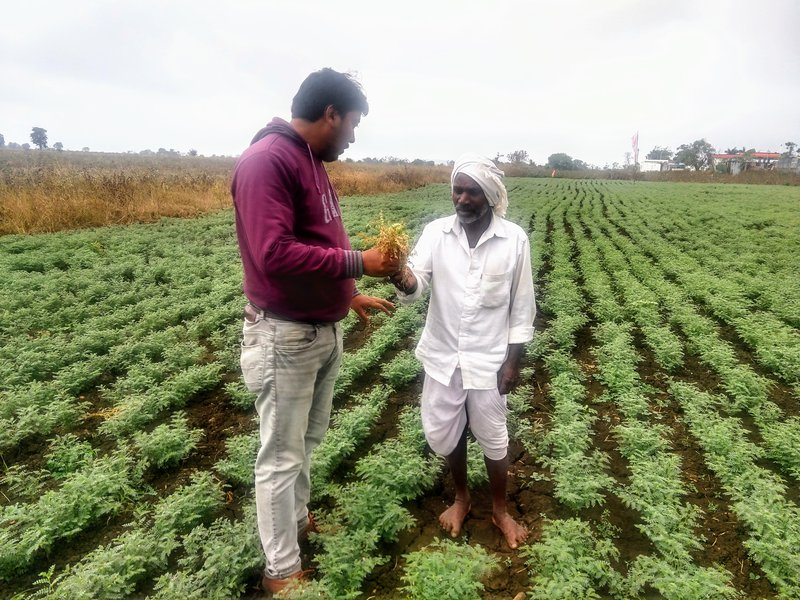 Dr Avijit Tarafdar of ICRISAT converses with chickpea farmer Mr Srinivasa Boreddy in Adilabad District, Telangana. Photo credit: D Chobe, ICRISAT