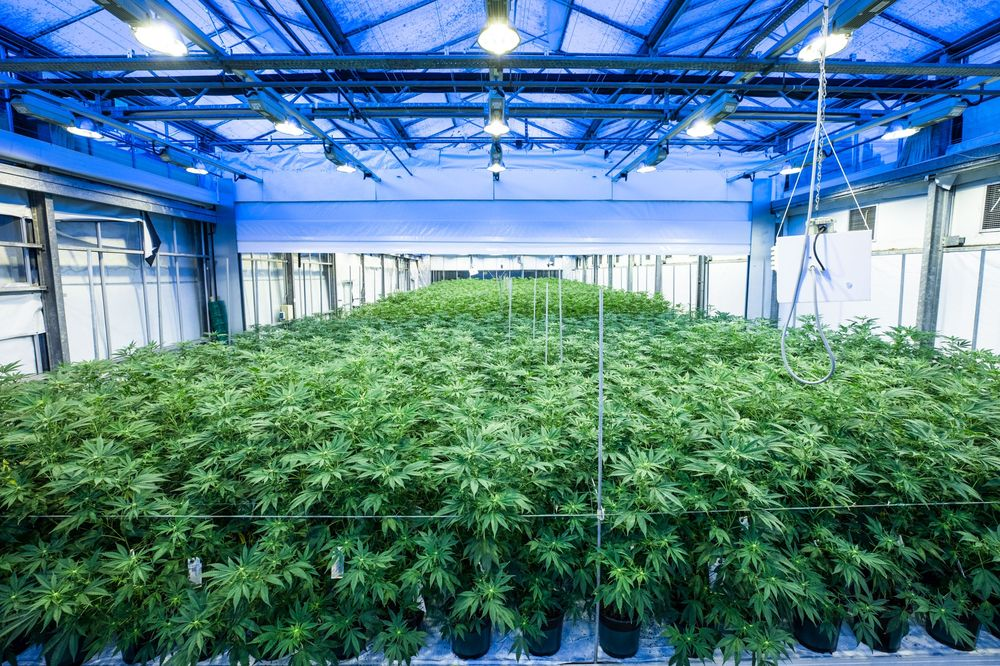 A boom in the cannabis industry that began a few years ago is now fueling sales of equipment like so-called grow lights. Photographer: Jason Alden/Bloomberg