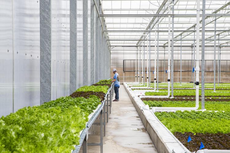 2018_revolution_farms_044.jpg