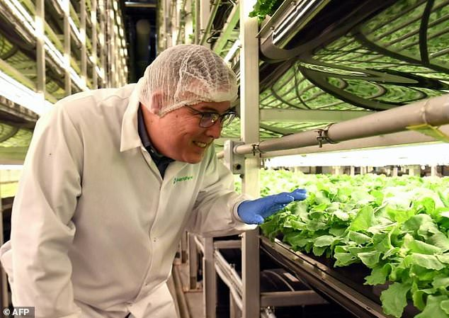 AeroFarms co-founder and chief marketing officer Marc Oshima looks at baby kale