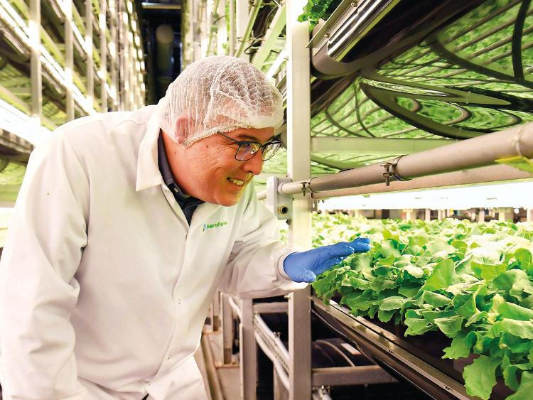AeroFarms co-founder Marc Oshima. AeroFarms of Newark, New Jersey, is the largest vertical farm in the world.Image Credit: AFP