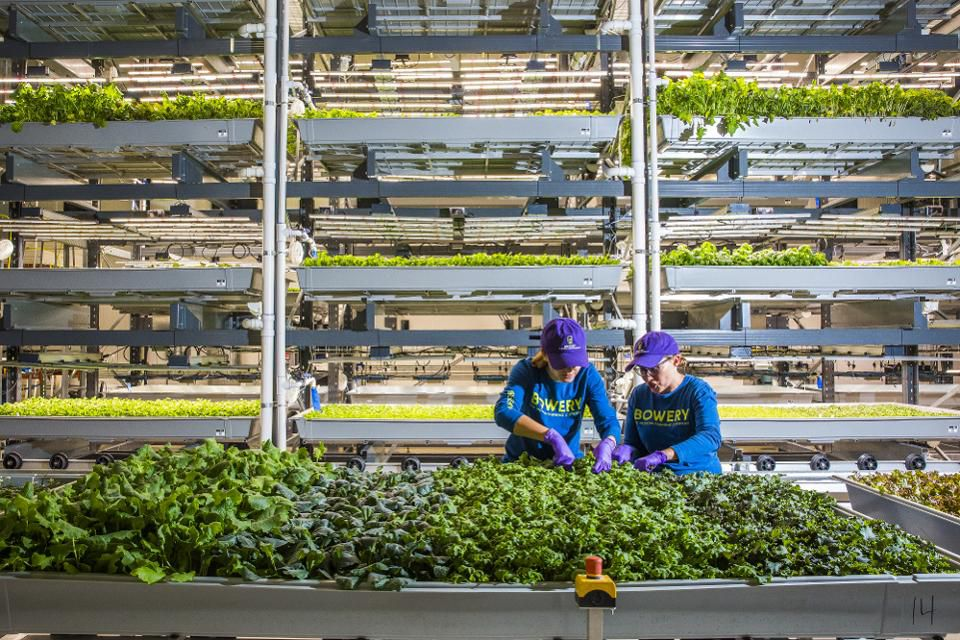 Farmers work at the Bowery Farming Inc. indoor farm in Kearny, New Jersey, U.S., on Tuesday, Aug. 7, 2018. Photographer: David Williams/Bloomberg© 2018 BLOOMBERG FINANCE LP