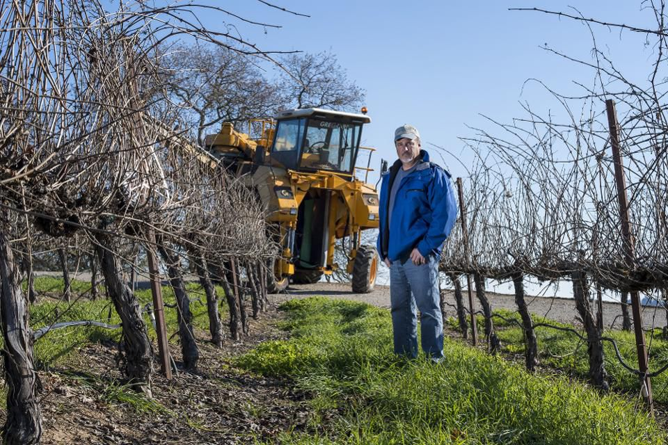 Brad Goehring, owner and operator of Goehring Vineyards Inc., stands for a photograph at one of his vineyards in Lodi, California, U.S., on Thursday, Dec. 29, 2016.Photographer: David Paul Morris/Bloomberg© 2017 BLOOMBERG FINANCE LP