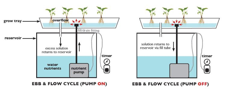 Image From:   https://gardenculturemagazine.com/techno-gardens/hydroponics/what-is-hydroponics-top-5-techniques/