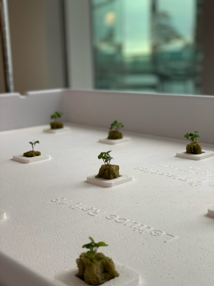 Hydroponics gardens located at the U's Lassonde Studios (Courtesy of Dylan Wootton)