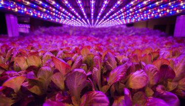 AeroFarms is a pioneer of aeroponic farming with an ambition to set up vertical farms in towns and cities across the world – image courtesy of AeroFarms.