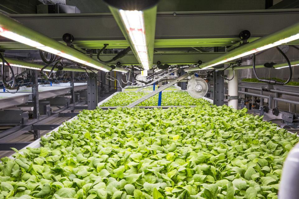 Rows of produce grow inside plastic trays at the Bowery Farming Inc. indoor farm in Kearny, New Jersey, U.S., on Tuesday, Aug. 7, 2018. The startup says automation, space-saving vertically stacked crops and a year-round growing season make its operations 100-plus times more productive per square foot than traditional farms. Photographer: David Williams/Bloomberg  © 2018 BLOOMBERG FINANCE LP