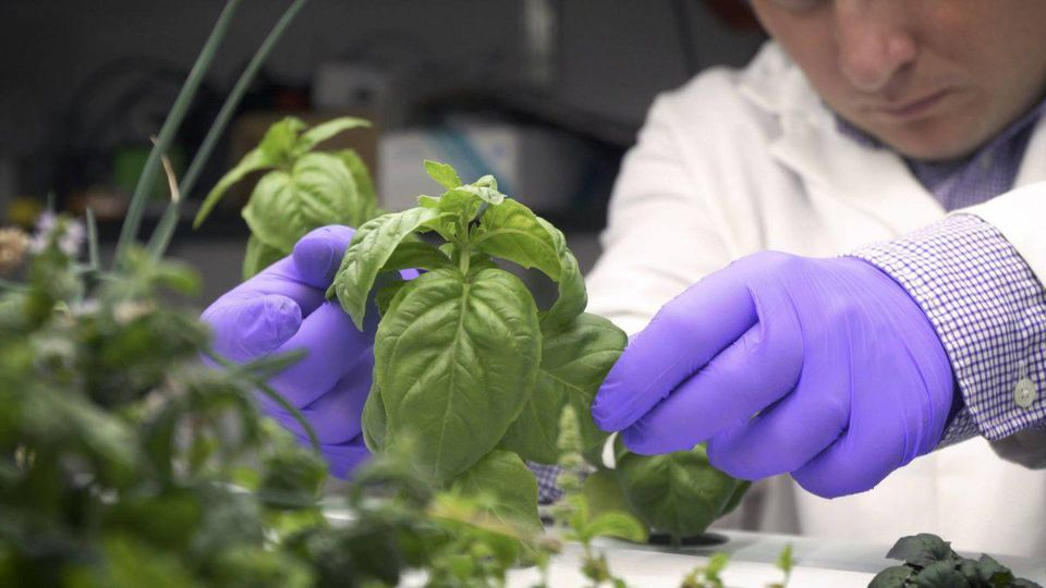 Dr. Paul Gauthier at work at the Princeton Vertical Farming Project labs  PRINCETON UNIVERSITY
