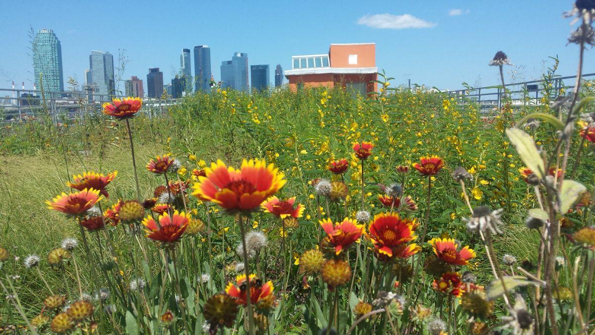 Kingsland Wildflower Rooftop . Image: Kingsland Wildflowers Green Roof & Community Space