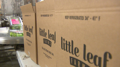 Little Leaf Farms products are boxed at their Devens facility. (WBZ-TV)