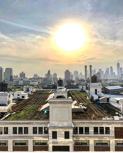 Next Saturday 3/23, Anastasia will be leading her day long Modeling an Urban Agriculture Business class. It's a really great one, and if you haven't already checked it out, please do ( https://www.brooklyngrangefarm.com/upcoming/muabdaylong ). To get her ready for all the great questions the students are bound to ask, we'll be doing our first ever AMA! Tomorrow morning tune into our instagram stories where we'll be asking all of you to send us all of your questions and we'll do our very best to get you answers. See you there. It's going to be great. 📷@rlespinal