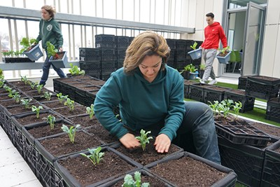 Photo by Ed Brennen   Macayla Cote of Mill City Grows helps transfer vegetables to growing containers at the new Green Roof garden at University Crossing.