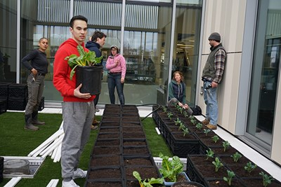 Photo by Ed Brennen   Student Society for Sustainability President Akbar Abduljalil helps transplant crops at the new Green Roof garden at University Crossing.