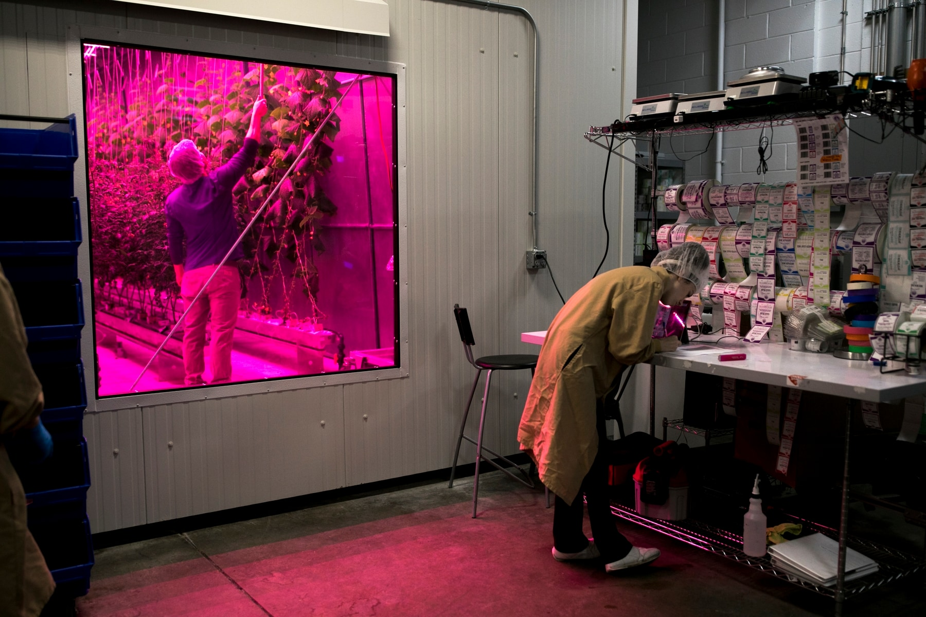 David Litvin, left, inspects vine crops while farm operations tech Devon Brown prepares labels for retail packaging. (Maddie McGarvey/For The Washington Post)