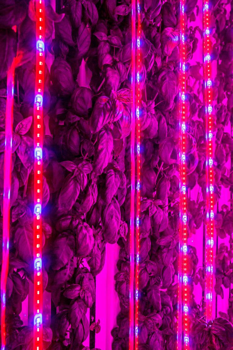 Freight+Farms+LED+lights.jpg