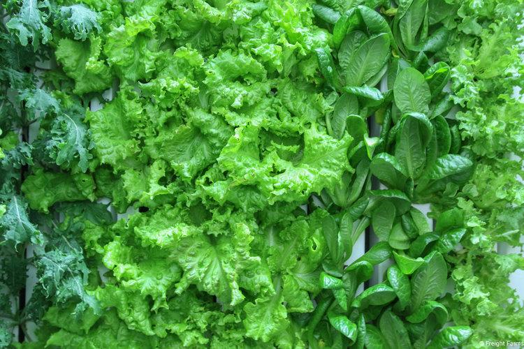 LGM_Leafy+Greens.jpg