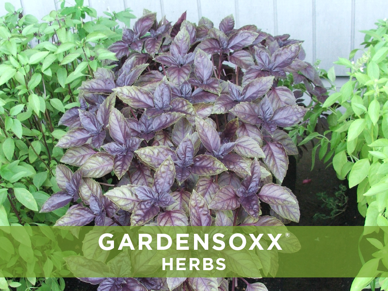 GardenSoxxHerbs_6.jpg
